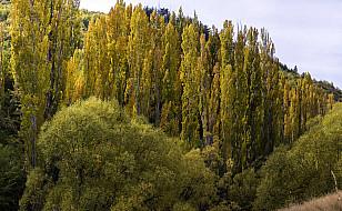 Wald bei der Goldgräberstadt Arrowtown