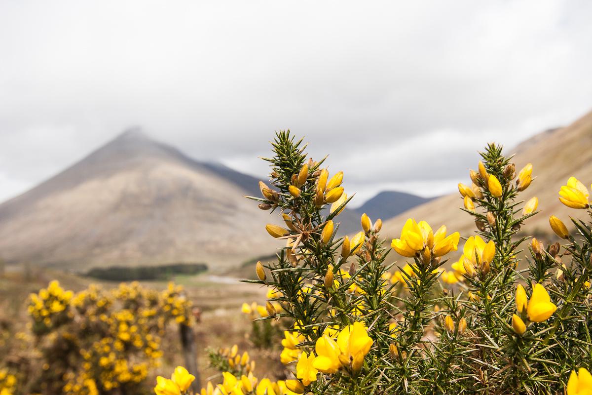 Schottland: 14.05.2012